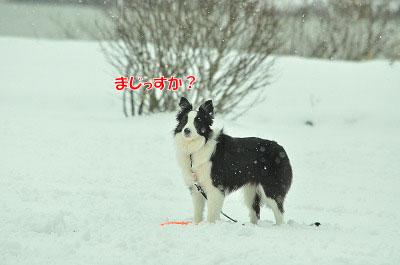 20120320-ren01.jpg