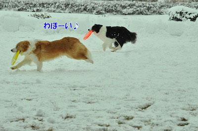 20120320-ren05.jpg