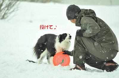 20120320-ren06.jpg