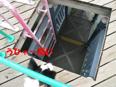 DSCN2061_convert_20100124221316.jpg