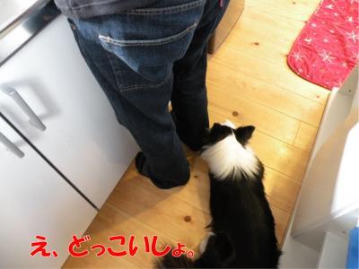 DSCN2081_convert_20100209212316.jpg
