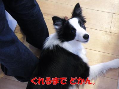DSCN2083_convert_20100209212334.jpg