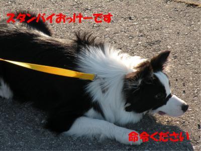 DSCN2166_convert_20100126230317.jpg