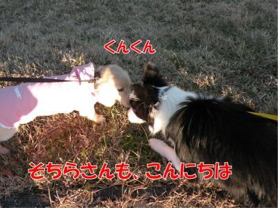 DSCN2181_convert_20100125223037.jpg