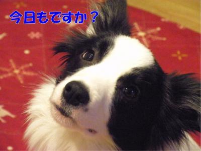 DSCN2562_convert_20100204212949.jpg