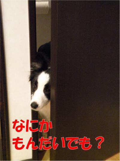 DSCN2787-1_convert_20100306152417.jpg