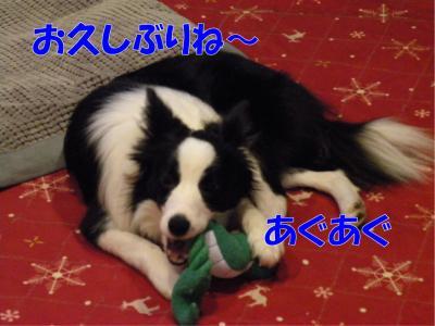 DSCN3226_convert_20100222181849.jpg
