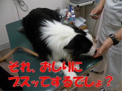 DSCN3437-1_convert_20100301172503.jpg