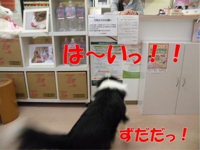DSCN3461-1_convert_20100301172557.jpg