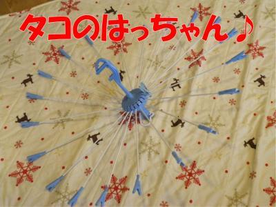 DSCN3478-1_convert_20100305213347.jpg