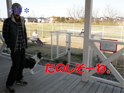 a-1080_convert_20100405183007.jpg