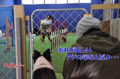 aj20110216-5.jpg