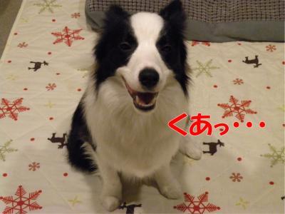 c-DSCN3521_convert_20100317222149.jpg