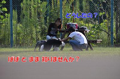 d-704.jpg