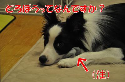 d4046_convert_2010072920320.jpg