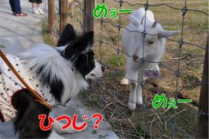 gg-2250_convert_20100506232406.jpg