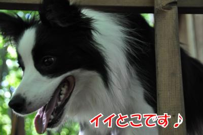 h4271_convert_2010072321414-0.jpg