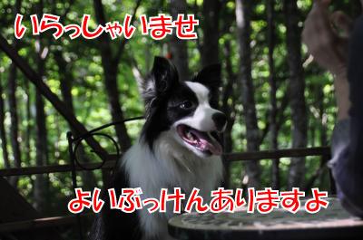 h4309_convert_2010072321430.jpg