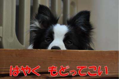 k-3686_convert_20100714214130.jpg
