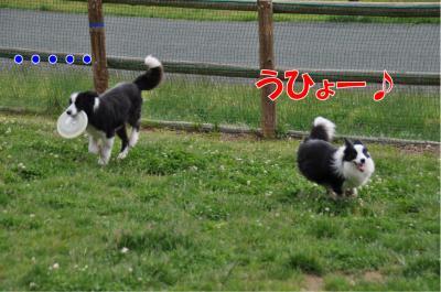 k9-2536_convert_20100603211155.jpg