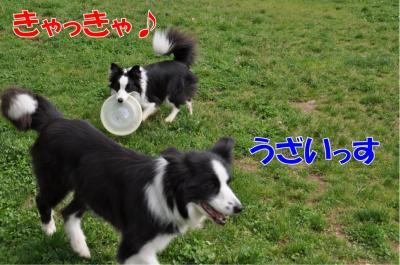 k9-2551_convert_20100603211233.jpg