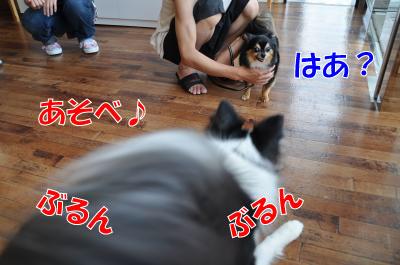 kk4649_convert_201008092339.jpg
