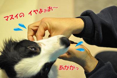 ku20110122-2.jpg