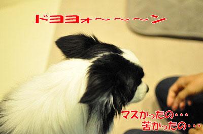 ku20110122-4.jpg