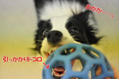 me20110210-3.jpg