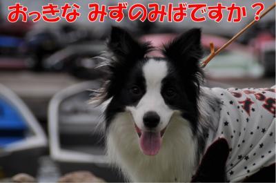 mm-4056_convert_20100720234349.jpg