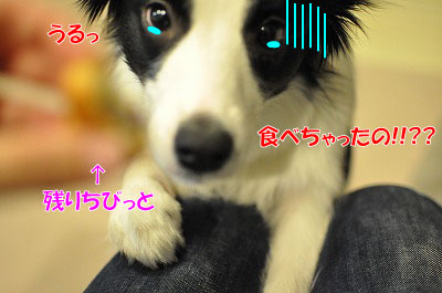 mo20110108-10.jpg