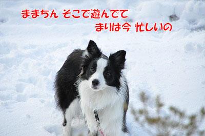 my20110109-12.jpg