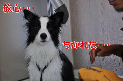 pp4586_convert_201008092059.jpg