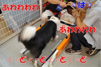 r-3635_convert_20100706210549.jpg