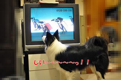 tv20110114-1.jpg