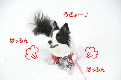 yu20110131-5.jpg