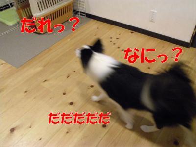 z-370_convert_20100318223013.jpg