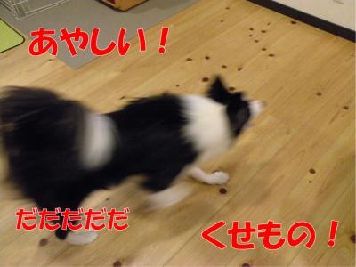 z-371_convert_20100318223024.jpg