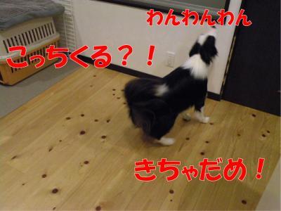 z-372_convert_20100318223034.jpg