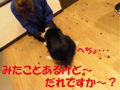 z-377_convert_20100318223045.jpg