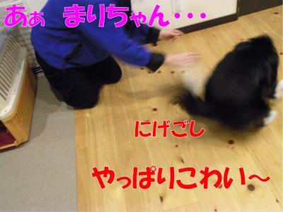 z-381_convert_20100318223055.jpg
