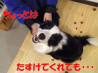 z-411_convert_20100318223225.jpg