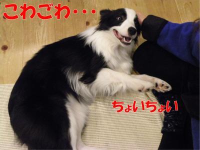 z-454_convert_20100318223257.jpg