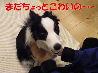 z-459_convert_20100318223308.jpg