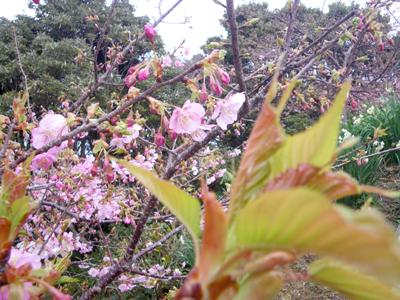 0-sakura2x_20110211130500.jpg