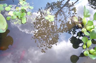 0-庭池x