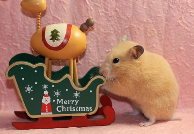 こんな風に今年もクリスマスを祝うはずだったのに・・・。