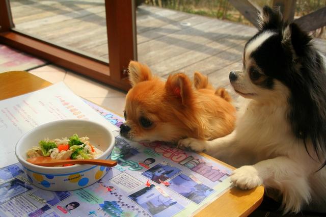 小梅ごはん食堂