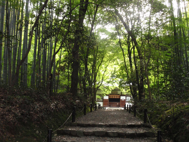 地蔵院(竹の寺)・境内
