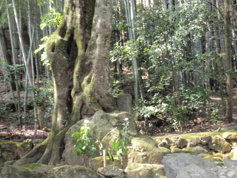 地蔵院(竹の寺)・細川頼之の墓